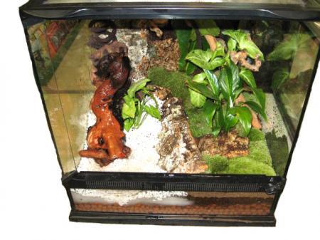 Complete Living Vivarium Starter Kit Reptiles Store